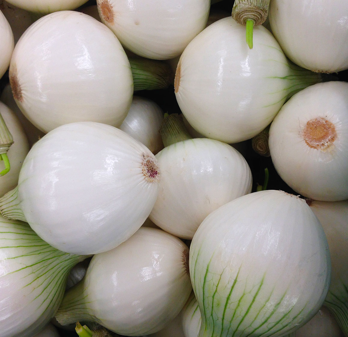 MAXIM - quick onion peeler Nilma